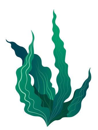 Tropical seaweed flora for aquarium or sea bottom