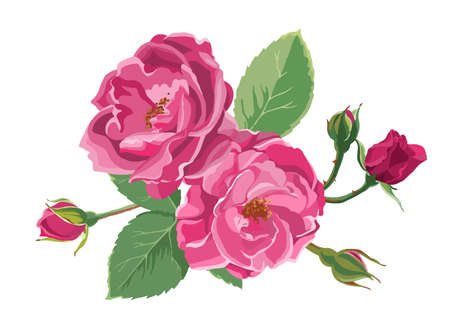 Blooming roses or peonies with leaves and buds