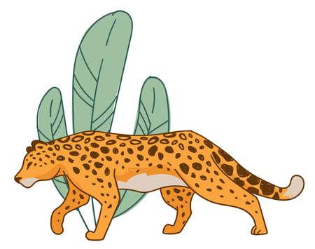 Hunting cheetah, feline animal hiding by leaves