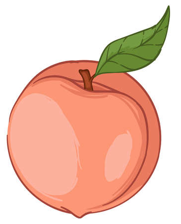 Peach or big apricot fresh fruit with green leaf