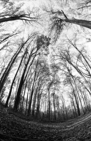 fish eye lens: beech forest
