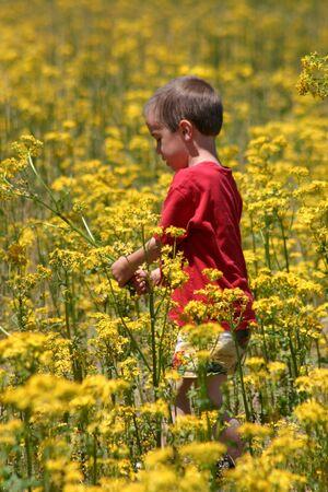 Boy in Flower Field Stock Photo - 447333