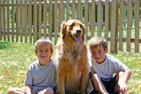 Boys &amp, Dog in Sun Stock Photo - 527265