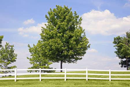 White Picket Fence Stock Photo - 1156967