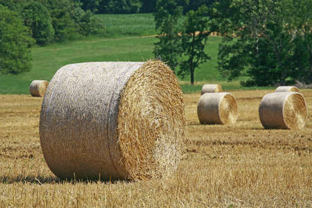 Field with Bales of Hay photo