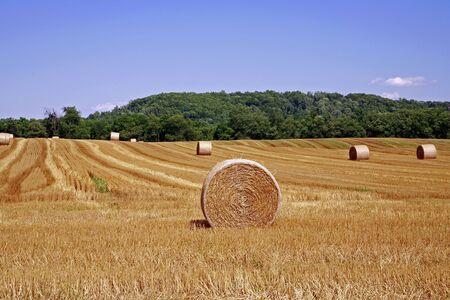 agronomic: Hay Bales