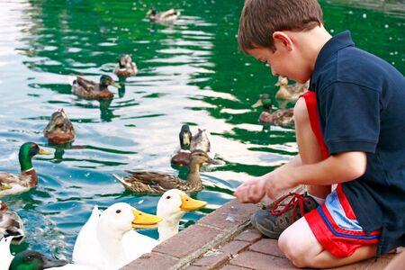 ducks in water: Boy Feeding Ducks
