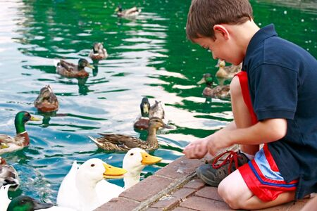 children pond: Boy Feeding Ducks