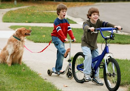 Boys Playing with the Dog Stock Photo