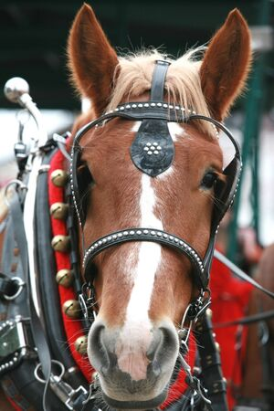 Christmas Horse photo