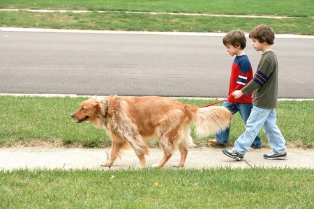Boys Walking the dog 스톡 콘텐츠