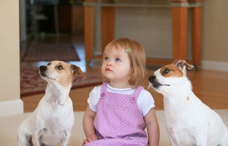 mujer perro: Ni�a con dos Jack Russell Terriors  Foto de archivo