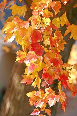 Fall Trees Stock Photo - 3428565