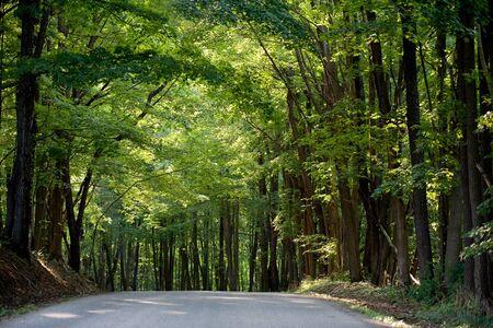 countryside landscape: Sunlit Road Stock Photo