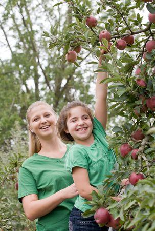cueillette: Petite fille et m�re Cueillette de pommes