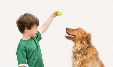 Chico jugar a la pelota con perro Foto de archivo - 4022533