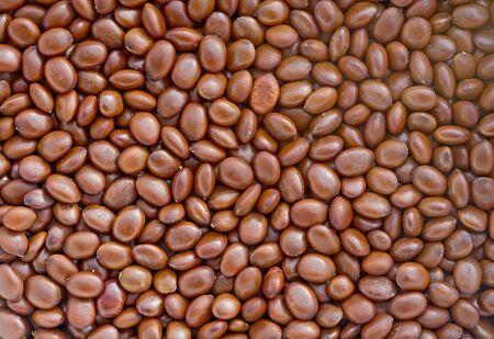 szarańcza: Iglicznia Nasiona