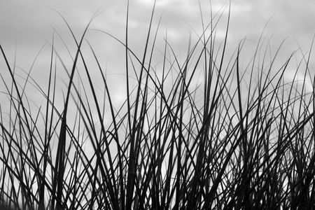 Grass on a Dark Cloudy Day
