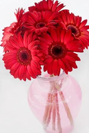 Bouquet de Red Daisies Banque d'images - 4085308