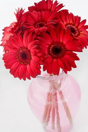 Bouquet of Red Daisies
