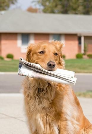 Hund Abholen der News Paper Standard-Bild - 4252773