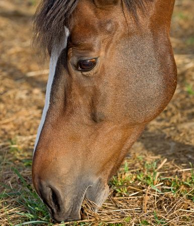 Close-up of Horses Face While Eating Banco de Imagens