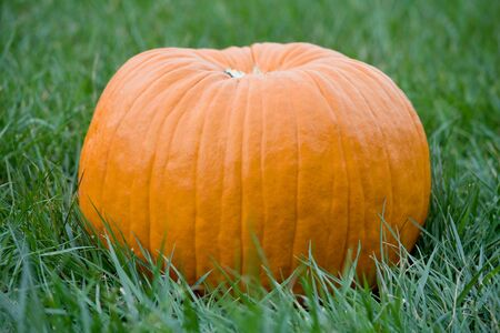 large pumpkin: Large Pumpkin Stock Photo