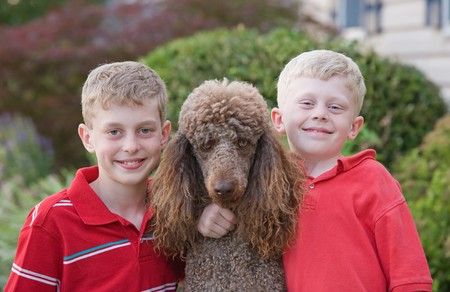 standard poodle: Brothers With Their Standard Poodle