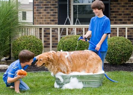 Jungen geben Hund ein Bad Standard-Bild - 22627211