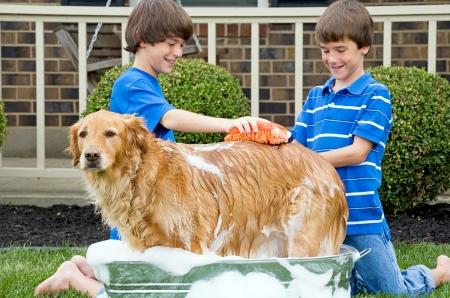 개에게 목욕을주는 소년 스톡 콘텐츠