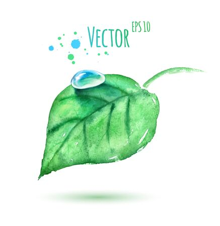 Vector watercolor illustration of green leaf with water drop.