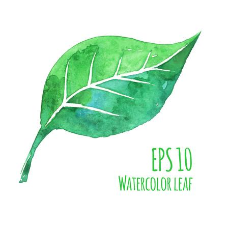 Vector watercolor illustration of watercolor leaf. Vektorové ilustrace