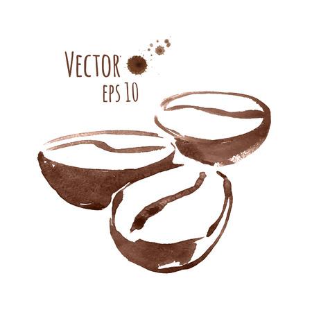 chicchi di caff�: A mano acquerello schizzo di chicchi di caff�. Vettoriali