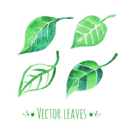Vector illustration of watercolor leaves. Vektorové ilustrace