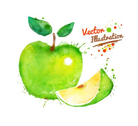 manzana verde: Vector dibujado a mano acuarela de manzana con salpicaduras de pintura.