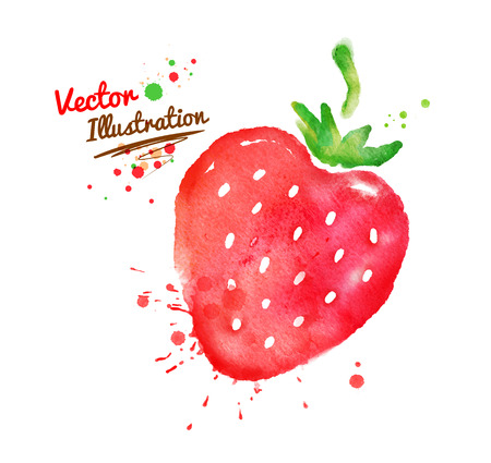 eating fruit: Vector watercolor hand drawn strawberry.