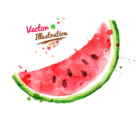 summer vegetable: Vector watercolor hand drawn watermelon.