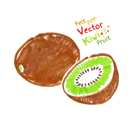 Vector felt pen child drawing of kiwi fruit.