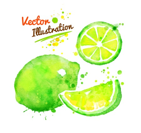 Vector watercolor hand drawn illustration of lime.