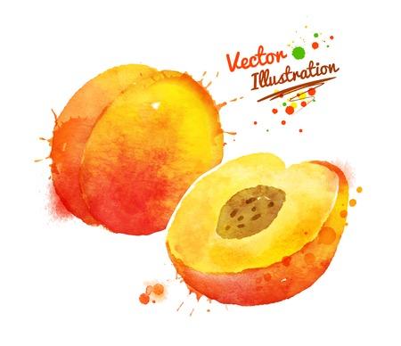 durazno: Vector acuarela dibujado a mano ilustración de melocotón. Vectores