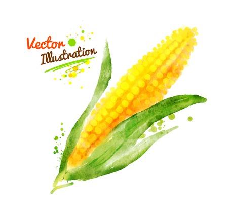 Aquarel vector tekening van maïs met verf spatten. Vector Illustratie
