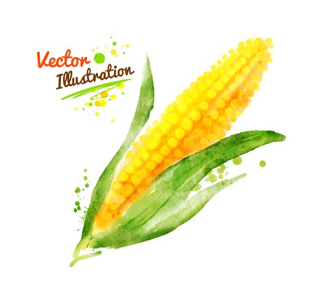 Watercolor vector drawing of corn with paint splashes.