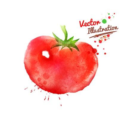 Watercolor vector tekening van tomaat met verf spatten.