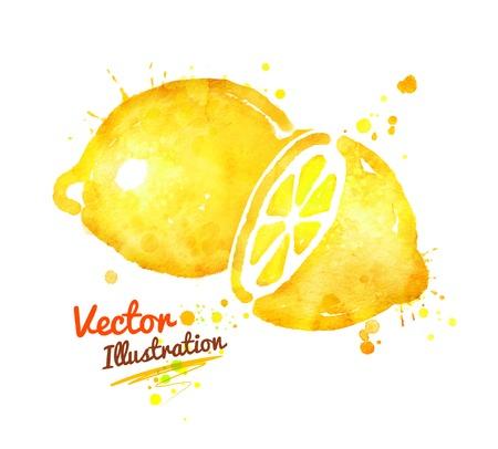 Watercolor vector illustration of lemon with paint splashes. 版權商用圖片 - 43122743