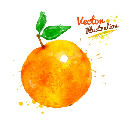 Watercolor vector illustration of an orange with paint splashes.