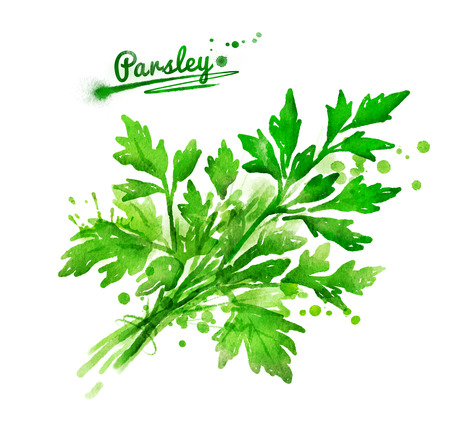 Watercolor hand drawn illustration of a bunch of parsley with paint splashes.