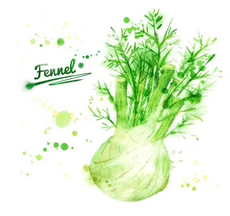 Hand drawn watercolor illustration of fennel with paint splashes.