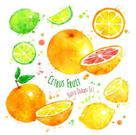 frutas tropicales: Dibujado a mano conjunto de la acuarela de los cítricos con salpicaduras de pintura. Foto de archivo