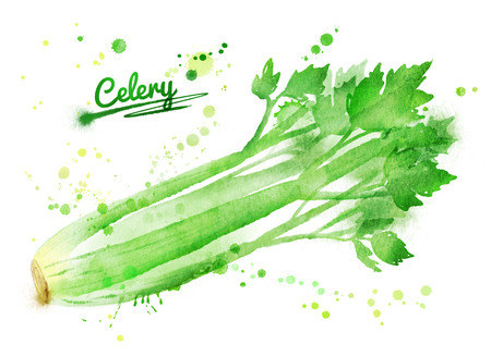 Hand drawn watercolor illustration of celery with paint splashes.