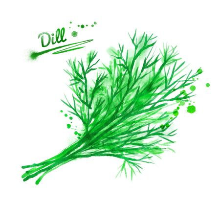 dill: Hand drawn watercolor illustration of dill with paint splashes.